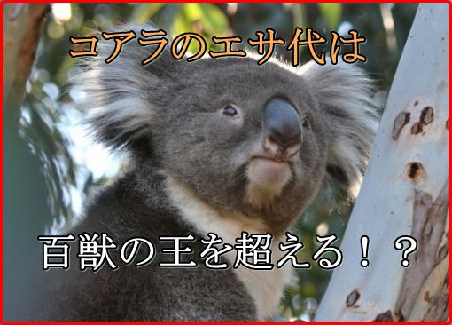 コアラのエサ代は百獣の王を超える!天王寺動物園の運営が厳しい理由